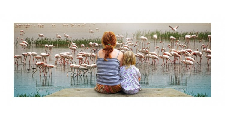 Izmir-Turkey-flamingos