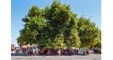 Tenedos-trees