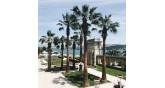 bahçe-palmiye ağaçları