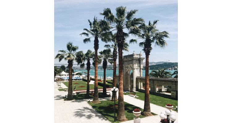 garden-palm trees